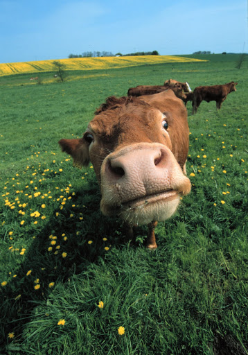 Read more about the article 10 gode grunner til å velge økologisk mat
