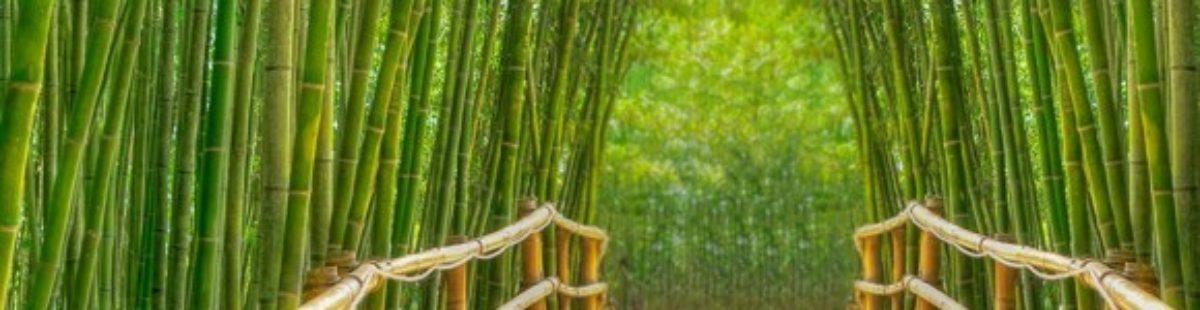 Bambus- unik økologisk tekstil