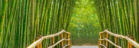 You are currently viewing Bambus- unik økologisk tekstil