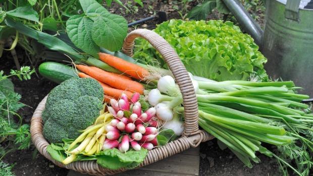 spiser bare grønnsaker