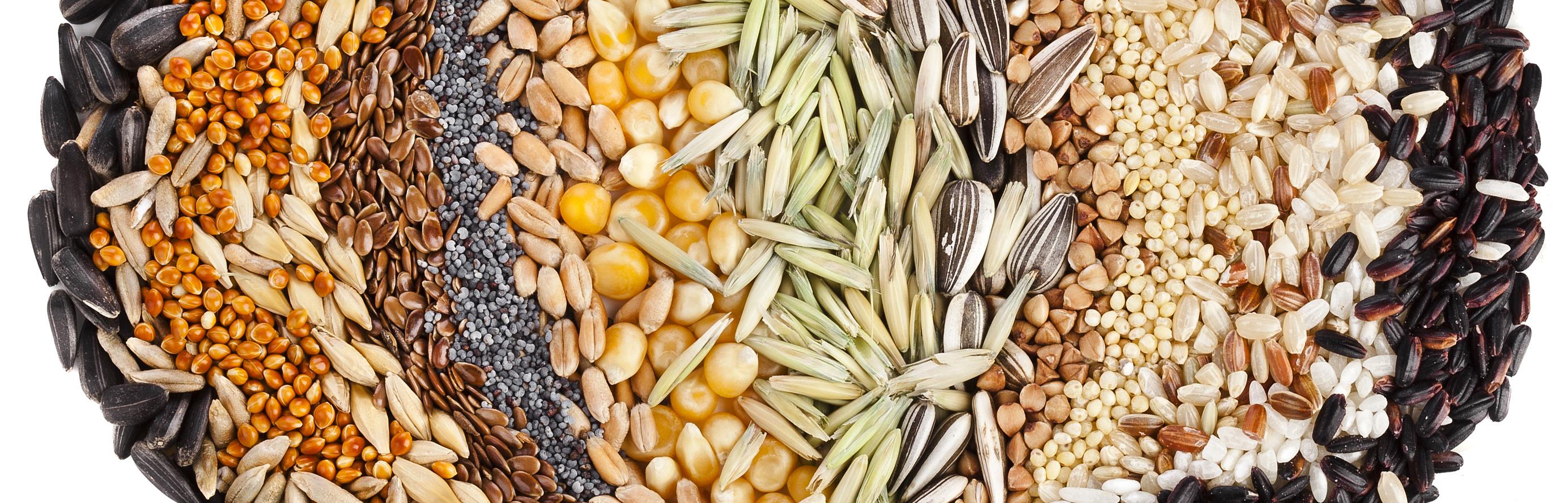 Næringsrike frø og kornslag