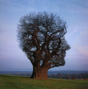 mindfullness1