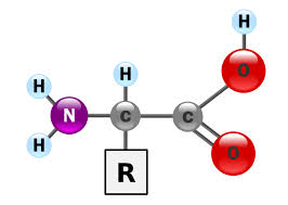 proteinkalkyle