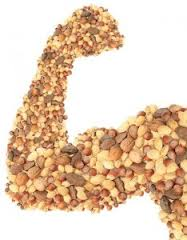 proteinmuskel