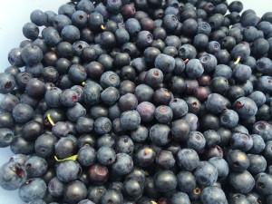 Blåbær (11)
