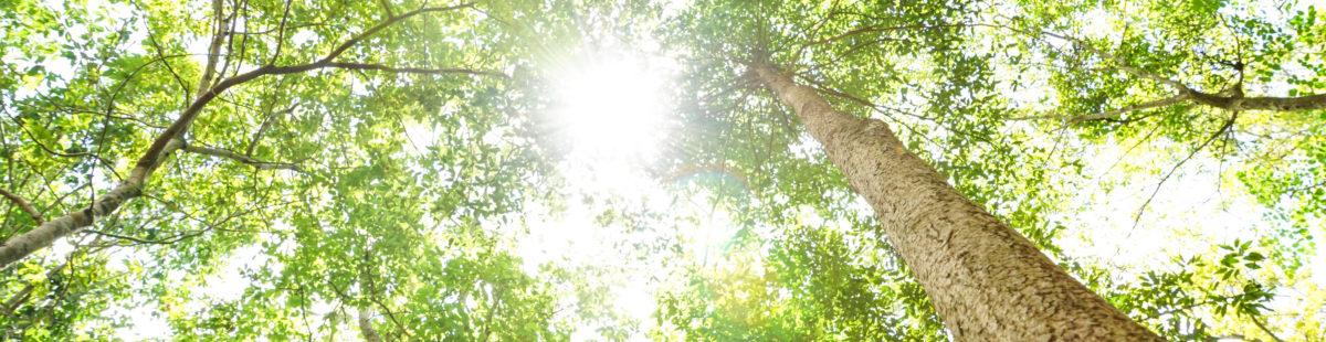 11 tips til Hvordan få mer energi og balanse i hverdagen?